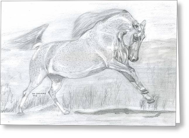 Wild Life Drawings Greeting Cards - Majestic Arabian  Greeting Card by Don  Gallacher