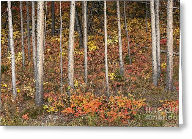 Autumn Prints Greeting Cards - Majestic Autumn in the Grand Tetons Greeting Card by Sandra Bronstein