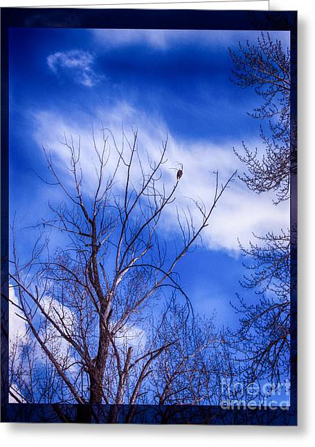 Okanogan National Forest Digital Greeting Cards - Majestic Bald Eagle in a Dramatic Sky Greeting Card by Omaste Witkowski
