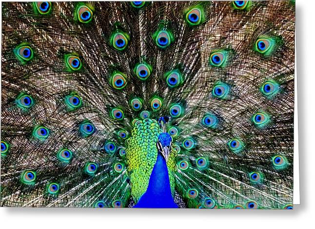 Large Birds Greeting Cards - Majestic Blue Greeting Card by Karen Wiles