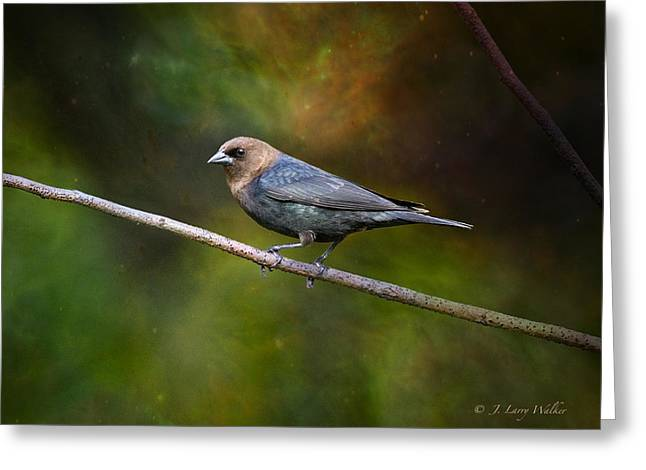 Cowbird Greeting Cards - Majestic Cowbird Looking Pretty Greeting Card by J Larry Walker