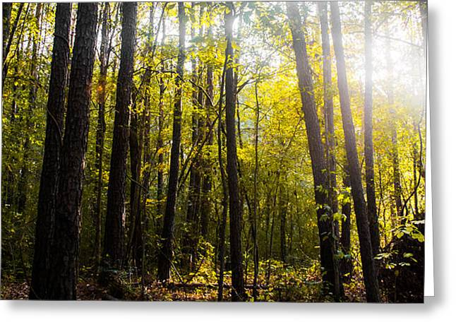 Forest Photographs Greeting Cards - Majestic Forest Greeting Card by Shelby  Young