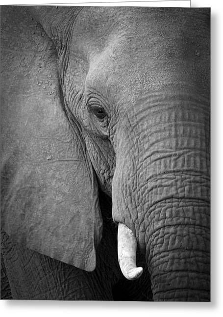 Majestic Giant Greeting Card by Alison Buttigieg