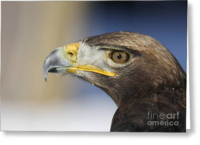 Majestic Golden Eagle Greeting Card by Inspired Nature Photography Fine Art Photography