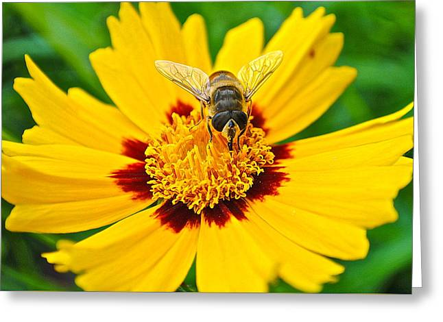 Stinger Greeting Cards - Majestic Granduer Greeting Card by Frozen in Time Fine Art Photography