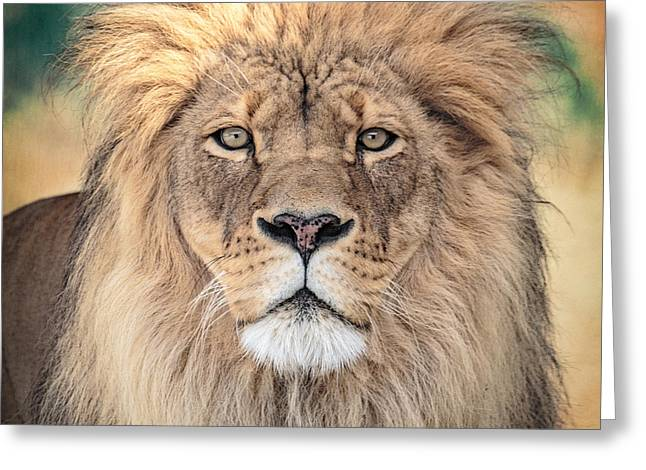 Lions Photographs Greeting Cards - Majestic King Greeting Card by Everet Regal