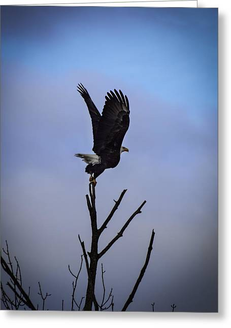 Eagle Greeting Cards - Majestic Launch Greeting Card by Thomas Young
