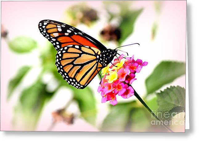 Pollenation Greeting Cards - Majestic Monarch Butterfly Greeting Card by Kathy  White
