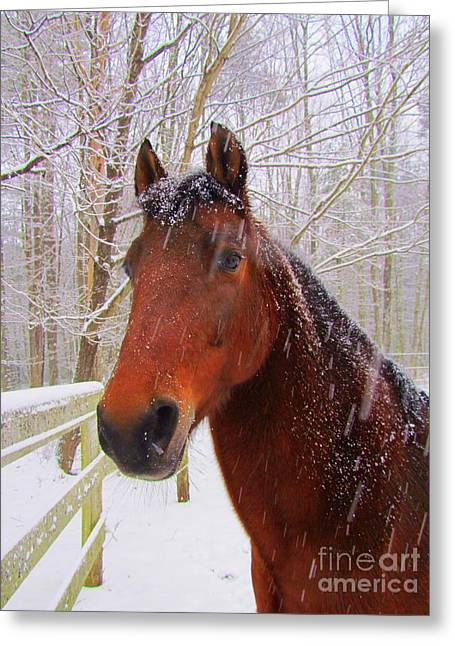 Maine Farms Greeting Cards - Majestic Morgan Horse Greeting Card by Elizabeth Dow