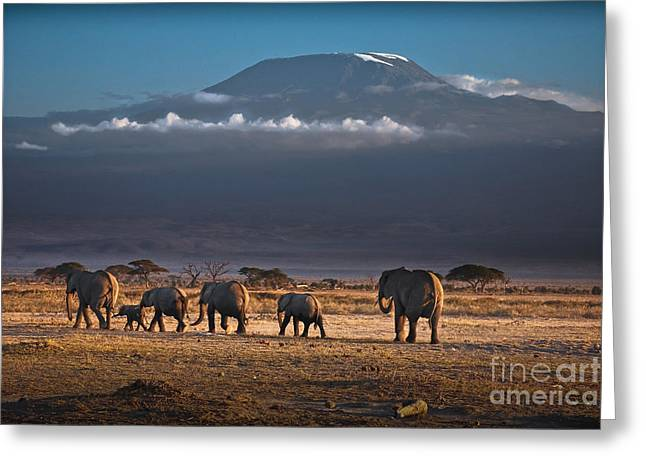 Grazing Snow Greeting Cards - Majestic Mount Kilimanjaro - OMG Greeting Card by Gary Keesler