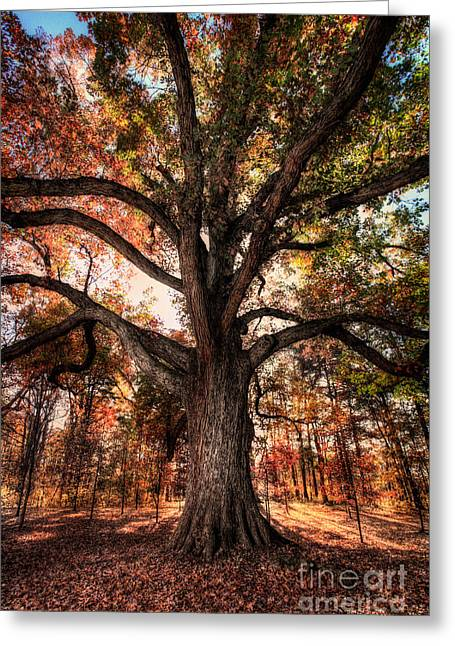 National Commercial Greeting Cards - Majestic Oak - Autumn in Greensboro I Greeting Card by Dan Carmichael