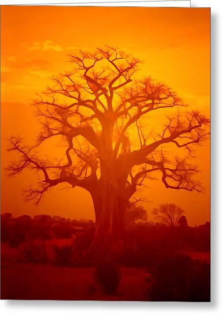 Baobab Greeting Cards - Majestic Sunset Tree Greeting Card by Douglas Barnard
