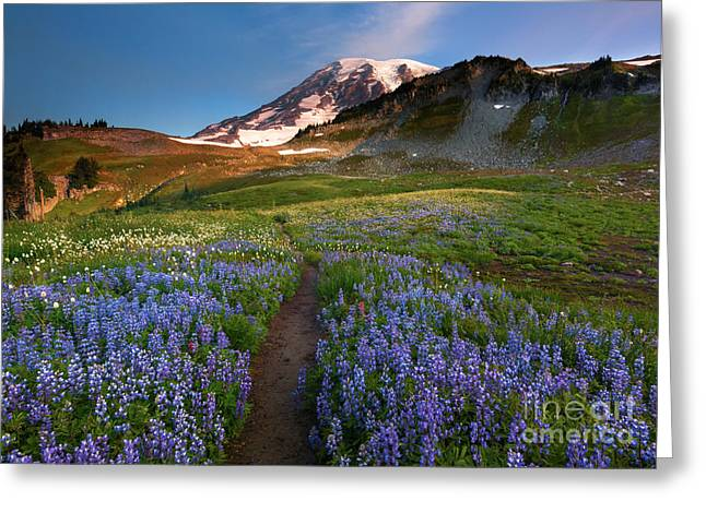 Mt Greeting Cards - Majestic Trail Greeting Card by Mike Dawson