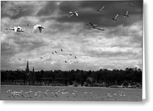 Major Migration Greeting Card by Thomas Young