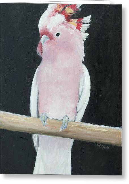 Australian Native Bird Greeting Cards - Major Mitchell Cockatoo Greeting Card by Jan Matson