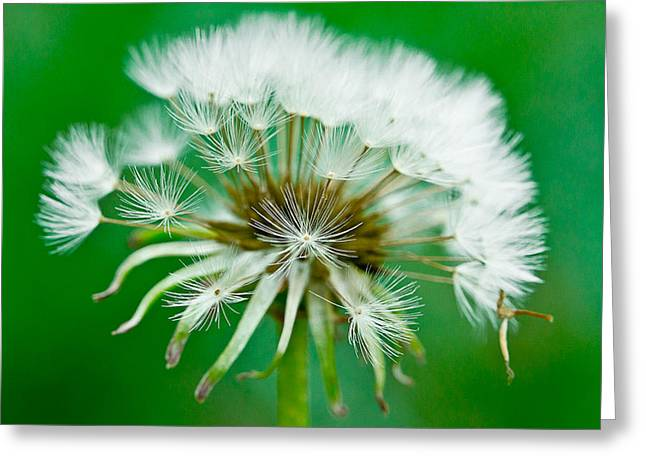 Arkansas Greeting Cards - Make a Wish Greeting Card by Annette Hugen
