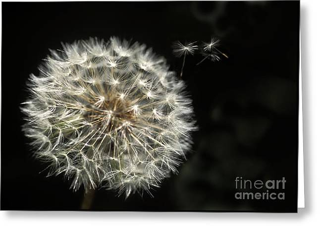 Wishes Greeting Cards - Make a Wish Greeting Card by Jan Bickerton