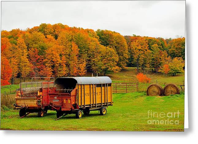 Fall Trees Greeting Cards - Make Hay While the Sun Shines Greeting Card by Terri Gostola