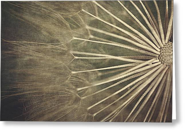 Close Focus Floral Digital Greeting Cards - Making A Wish...  Greeting Card by Maria Angelica Maira