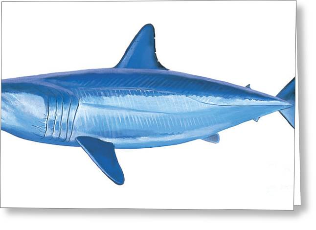 White Shark Paintings Greeting Cards - Mako Shark Greeting Card by Carey Chen