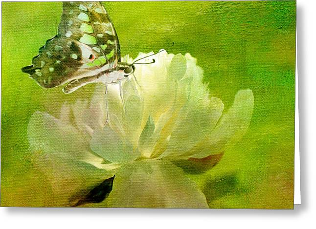 Butterfly On Flower Greeting Cards - Malachite on Peony Greeting Card by Lois Bryan
