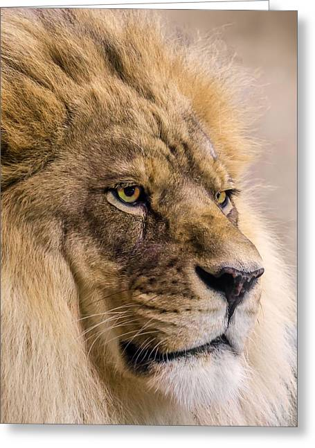 Panthera Photographs Greeting Cards - Male African Lion Greeting Card by Jim Hughes