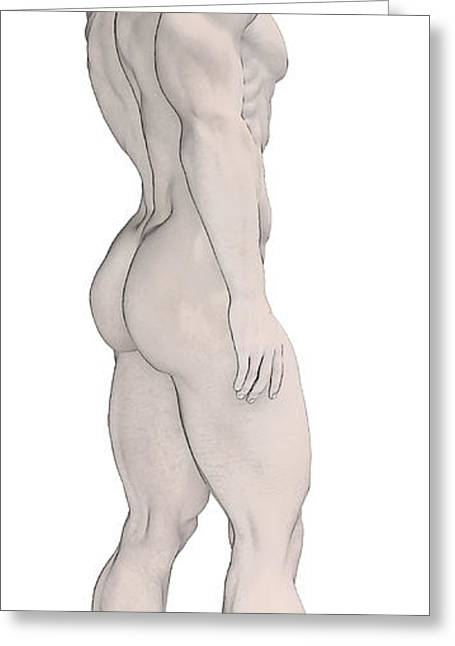 Gay Male Drawings Greeting Cards - Male Anatomy By Quim Abella Greeting Card by Joaquin Abella