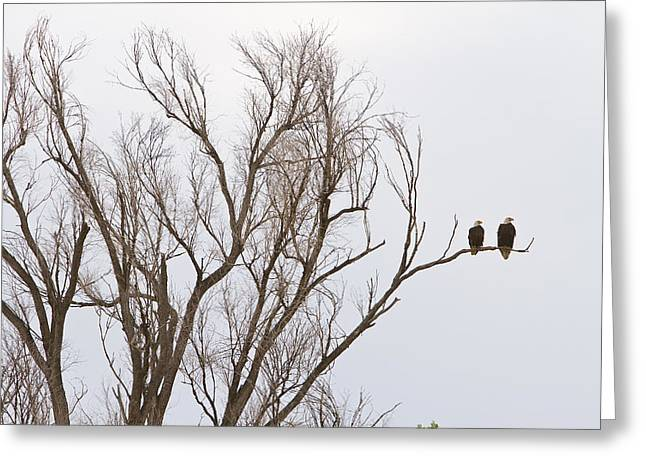 Eaglet Greeting Cards - Male and Female Bald Eagles Greeting Card by James BO  Insogna
