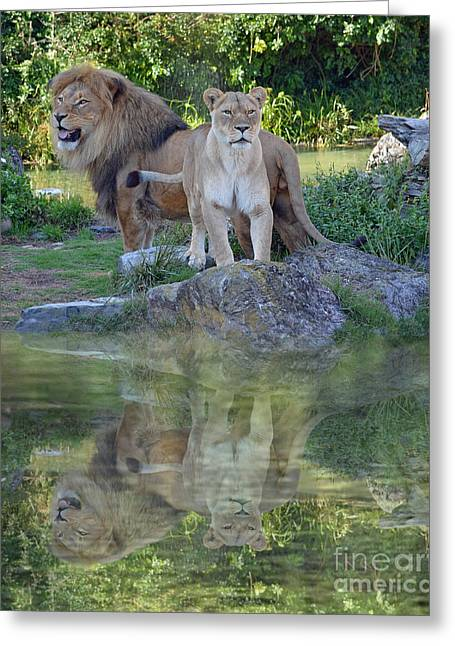 Reflection In Water Greeting Cards - Male and Female Lions by a Lake Greeting Card by Jim Fitzpatrick