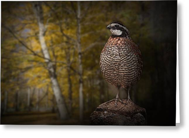 Gamebird Greeting Cards - Male Bobwhite Quail Greeting Card by Randall Nyhof