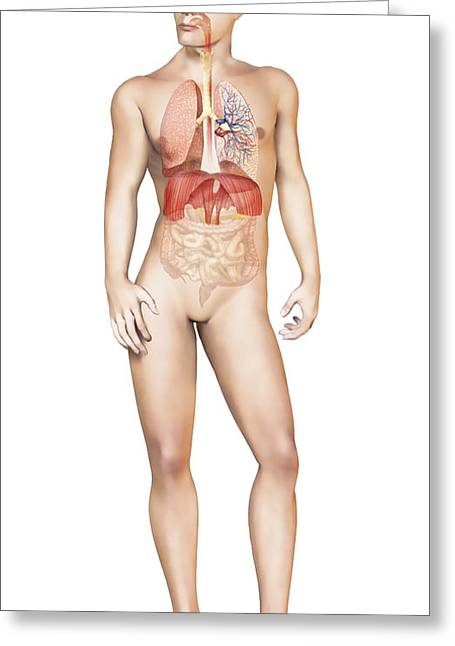 Full Body Digital Art Greeting Cards - Male Body Standing, With Full Greeting Card by Leonello Calvetti
