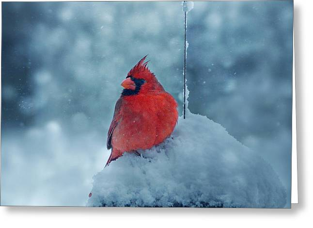 Red Bird In Snow Greeting Cards - Male Cardinal in the Snow Greeting Card by Sandy Keeton