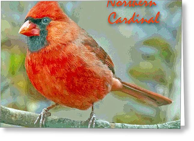Greeting Card featuring the photograph Male Cardinal On Tree Branch by A Gurmankin
