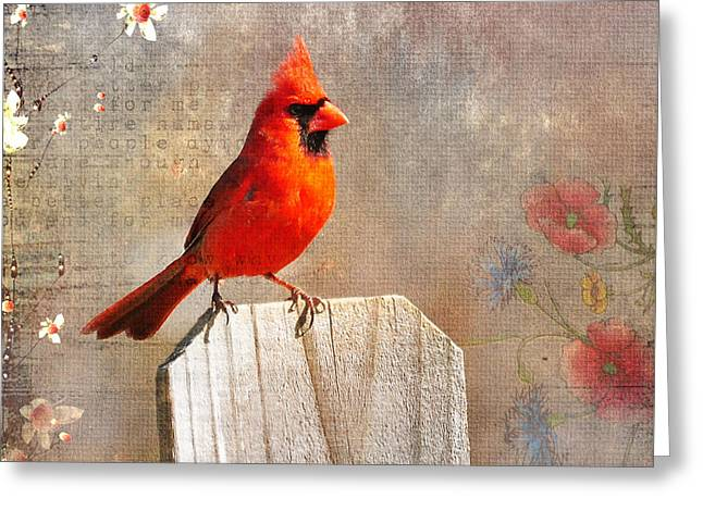 Feeding Birds Greeting Cards - Male Cardinal Greeting Card by Todd Hostetter