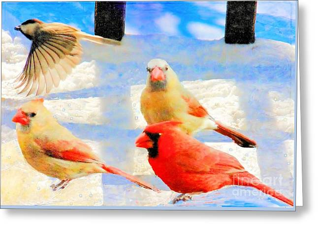 Male Cardinal With Two Females And Junco Greeting Card by Janette Boyd