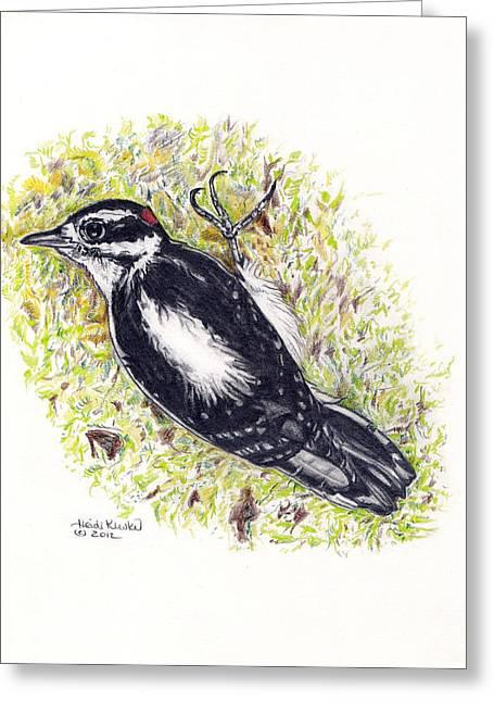 Moss Green Drawings Greeting Cards - Male Downy Woodpecker Greeting Card by Heidi Kunkel