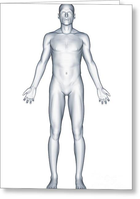 Full Body Greeting Cards - Male Figure Greeting Card by Science Picture Co