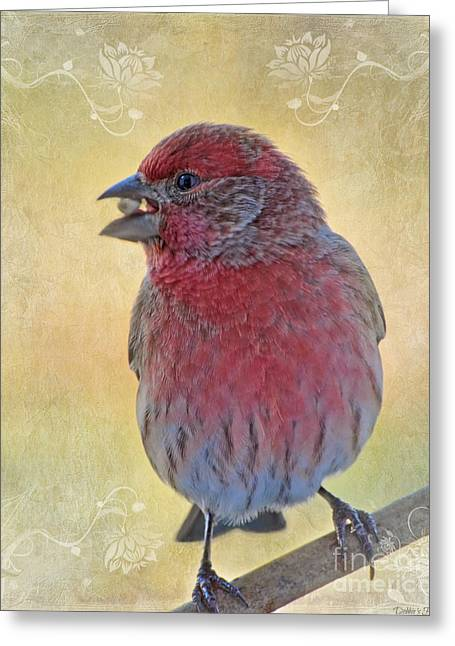 Bird Greetingcards Greeting Cards - Male housefinch with corner decorations Greeting Card by Debbie Portwood
