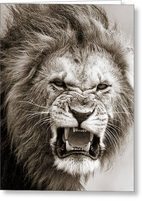 Lions Greeting Cards - Male Lion I Masai Mara Kenya Greeting Card by Regina Mueller