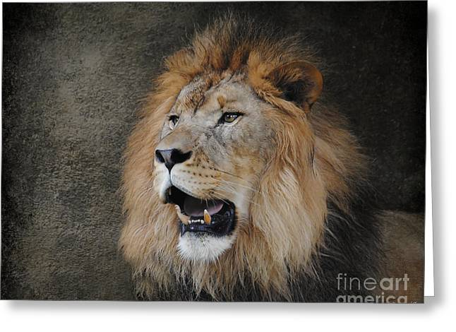Wildcats Greeting Cards - Male Lion II Greeting Card by Jai Johnson