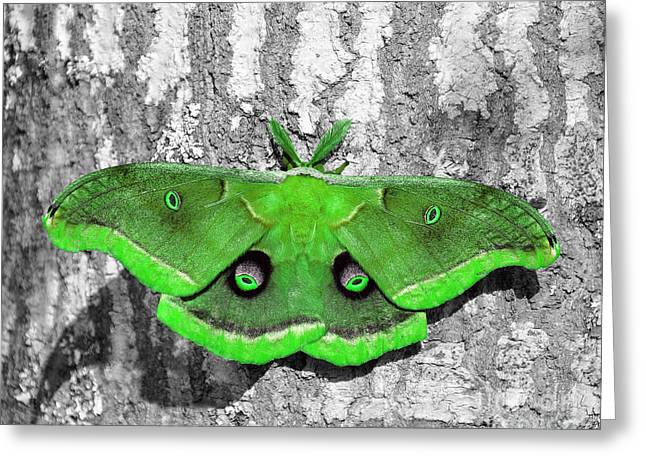 Outdoor Photography Digital Greeting Cards - Male Moth Green Greeting Card by Al Powell Photography USA