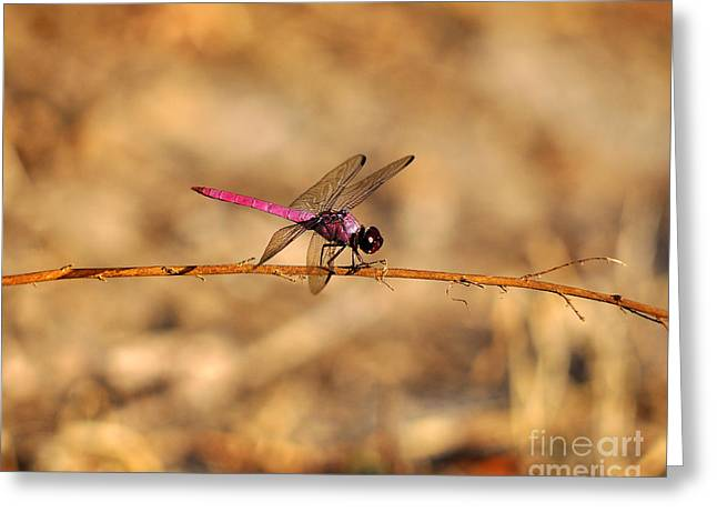 Al Powell Photography Usa Greeting Cards - Male Roseate Skimmer Greeting Card by Al Powell Photography USA