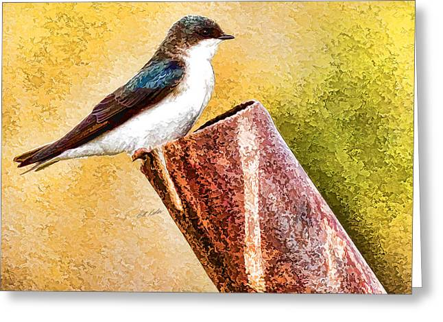 Bill Kesler Greeting Cards - Male Tree Swallow No. 2 Greeting Card by Bill Kesler