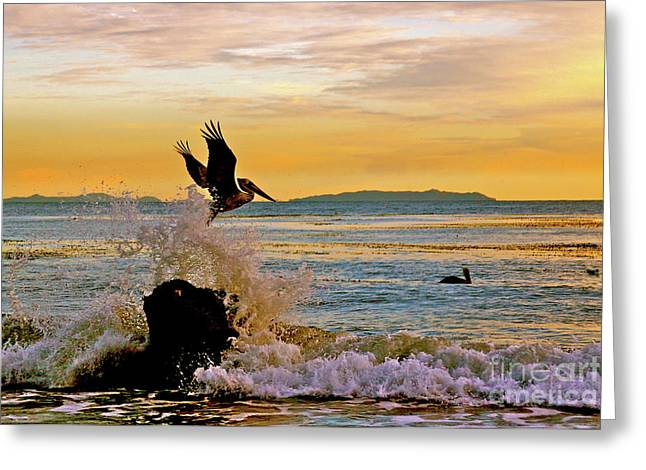 Recently Sold -  - Gloaming Greeting Cards - Malibu Eventide Greeting Card by Maureen J Haldeman