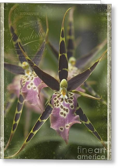 Monocots Greeting Cards - Maliko Dreams Greeting Card by Sharon Mau