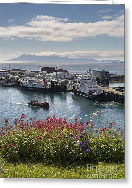 Midge Greeting Cards - Mallaig and Rhum in High Summer Greeting Card by John Potter