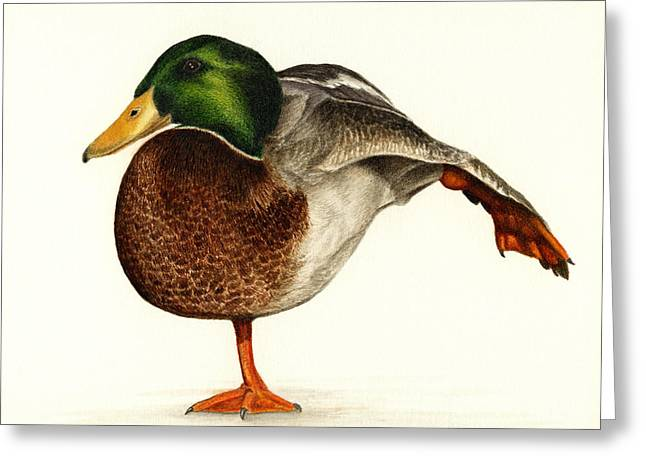 Mallard Paintings Greeting Cards - Mallard Ballet Greeting Card by Pat Erickson