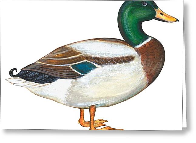 Close Up Paintings Greeting Cards - Mallard duck Greeting Card by Anonymous