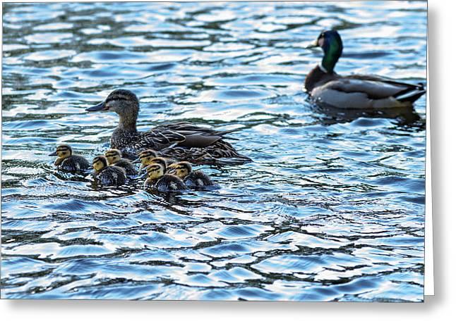 Mallard Ducks Greeting Card by Babak Tafreshi