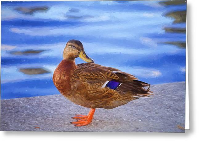 Bird Digital Art Greeting Cards - Mallard Hen Greeting Card by Kim Hojnacki